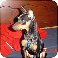 Adopt A Pet :: Louie - Springvale, ME