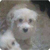 Adopt A Pet :: Sophie Helen - Phoenix, AZ