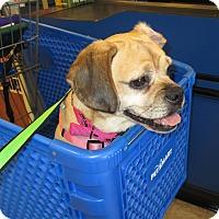 Adopt A Pet :: Frankie - Jacksonville, FL
