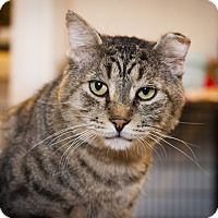Adopt A Pet :: Hank Moody - Chicago, IL