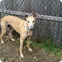 Adopt A Pet :: Dylan - Swanzey, NH
