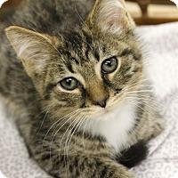 Adopt A Pet :: Cadbury - Medina, OH