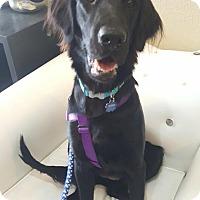 Adopt A Pet :: Onyx - Fullerton, CA