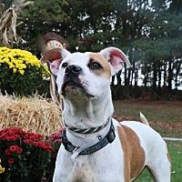 Adopt A Pet :: Autumn - Brookhaven, NY