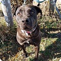 Adopt A Pet :: Maddie Lynn - Colfax, IL