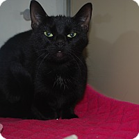 Adopt A Pet :: Hershey - New Castle, PA
