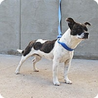 Adopt A Pet :: A25 Jackson - Odessa, TX