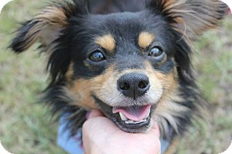 Terrier (Unknown Type, Small) Mix Dog for adoption in Baton Rouge, Louisiana - Trapper