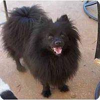 Adopt A Pet :: Jackie - York, SC