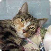 Adopt A Pet :: Persephone - Maywood, NJ