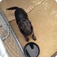 Adopt A Pet :: Sargent - Attica, IN