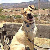 Adopt A Pet :: Henry - Los Angeles, CA