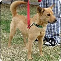 Adopt A Pet :: Goldie - Toronto/Etobicoke/GTA, ON