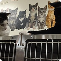 Adopt A Pet :: Kye - Chesapeake, VA
