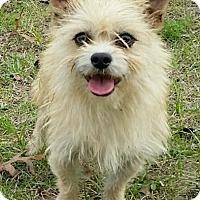 Adopt A Pet :: Happy - Orlando, FL