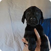 Adopt A Pet :: Josie - Oviedo, FL