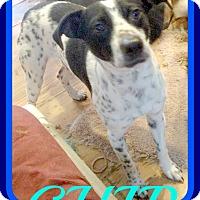 Adopt A Pet :: CHIP - Mount Royal, QC