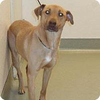 Adopt A Pet :: Delilah - Wildomar, CA