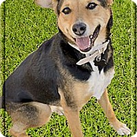 Adopt A Pet :: Ruby fun family dog - Sacramento, CA