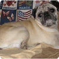 Adopt A Pet :: Savannah - Strasburg, CO