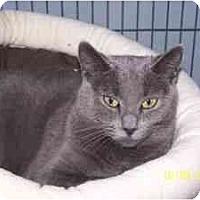 Adopt A Pet :: Sweetie - Milwaukee, WI