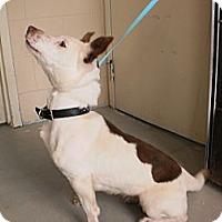 Adopt A Pet :: Minnie - Wallaceburg, ON