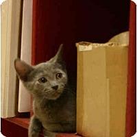 Adopt A Pet :: Waffle - Jenkintown, PA