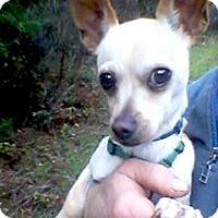Adopt A Pet :: Orson - Sacramento, CA