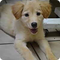 Adopt A Pet :: Kaylee - Knoxville, TN