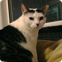 Adopt A Pet :: Sly - Monroe, GA