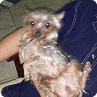 Adopt A Pet :: Cici - Northumberland, ON