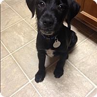 Adopt A Pet :: Apollo - Marietta, GA