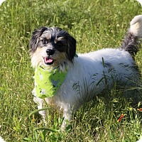 Adopt A Pet :: Prince - San Antonio, TX