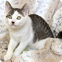 Adopt A Pet :: Frederick - St Louis, MO