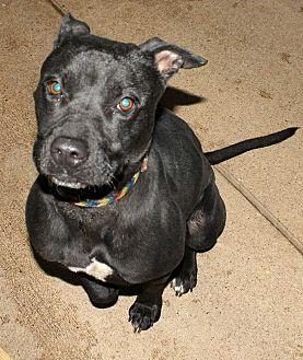 Labrador Retriever Mix Dog for adoption in Fort Madison, Iowa - Gilda
