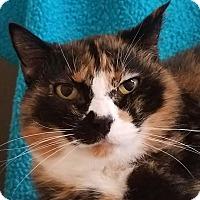 Adopt A Pet :: Frannie - Colfax, IA