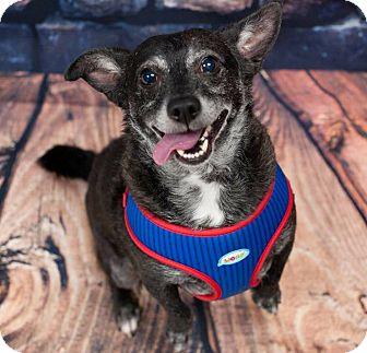 Corgi/Dachshund Mix Dog for adoption in Oakley, California - Sammy