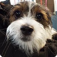 Adopt A Pet :: Chloe - Grants Pass, OR