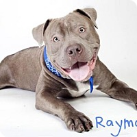 Adopt A Pet :: *RAYMOND - Sacramento, CA