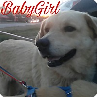 Adopt A Pet :: Baby Girl - Union City, TN
