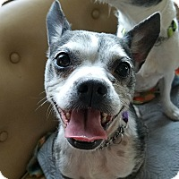 Adopt A Pet :: Butler - Bellingham, WA