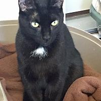 Adopt A Pet :: Shadow - Greensburg, PA