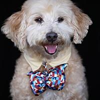 Adopt A Pet :: Beau - SAN PEDRO, CA