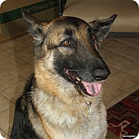 German Shepherd Dog Dog for adoption in Phoenix, Arizona - Jackie O