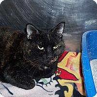 Adopt A Pet :: Priscilla - El Cajon, CA