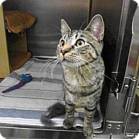 Adopt A Pet :: Holly - Warminster, PA