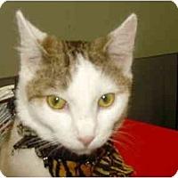 Adopt A Pet :: Forest - Warren, MI