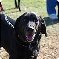 Adopt A Pet :: Mr. Pibb - Cumming, GA