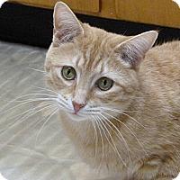 Adopt A Pet :: Casper - Bedford, MA