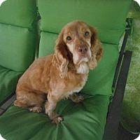 Adopt A Pet :: Lucky Boy/Special Needs Foster - Kannapolis, NC